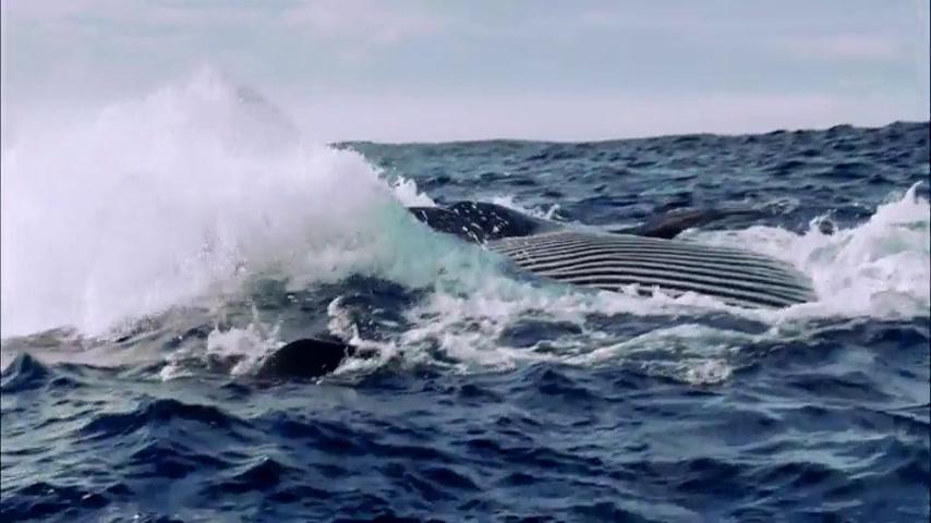 Ocean Sample Video